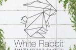 white-rabbit-4am-saatchi-saatchi logo