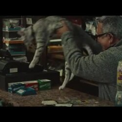 Holiday Campaign Interview: Bodega Cat