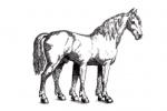des-cheval logo