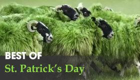 Best St. Patrick's Day Ads 2015