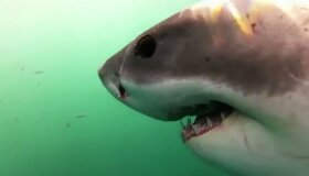 Best of Sharks
